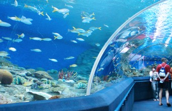 อันเดอร์วอเตอร์เวิร์ล พัทยา (Underwater world Pattaya) (4)