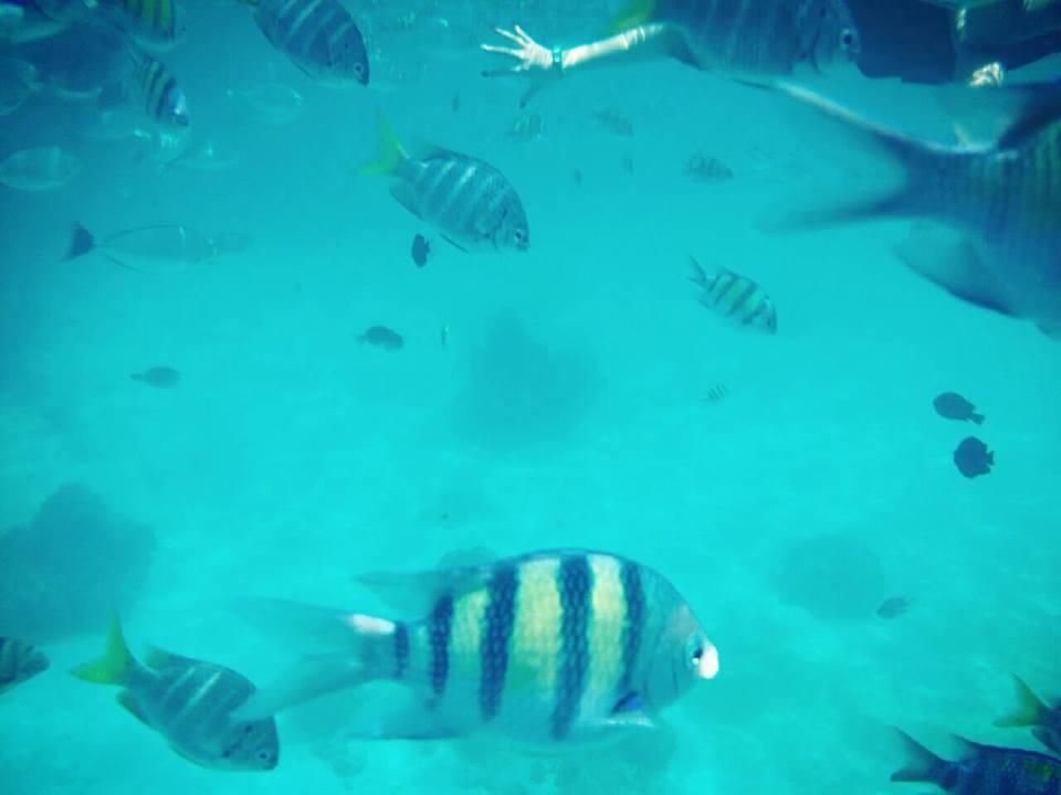 ปลาสีสันสดใส ณ เกาะราชา