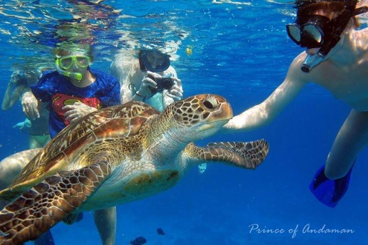 เต่ามะเฟืองตัวใหญ่ แสดงถึงความสมบูรณ์ของทะเล ภาพโดยทีมงาน Prince of Andaman