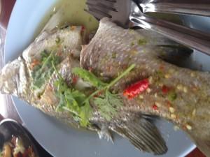 ปลากระพงนิ่งมะนาว