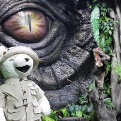Teddy-เทดดี้แบร์พัทยา3