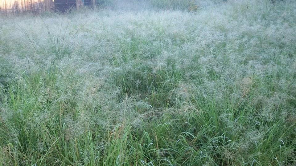 ดอยม่อนจอง-หญ้า