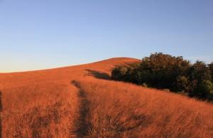 ดอยม่อนจอง-เส้นทางเดินชมวิว