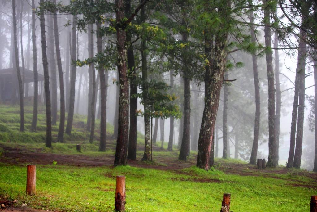 ดอยอ่างขาง-ป่า