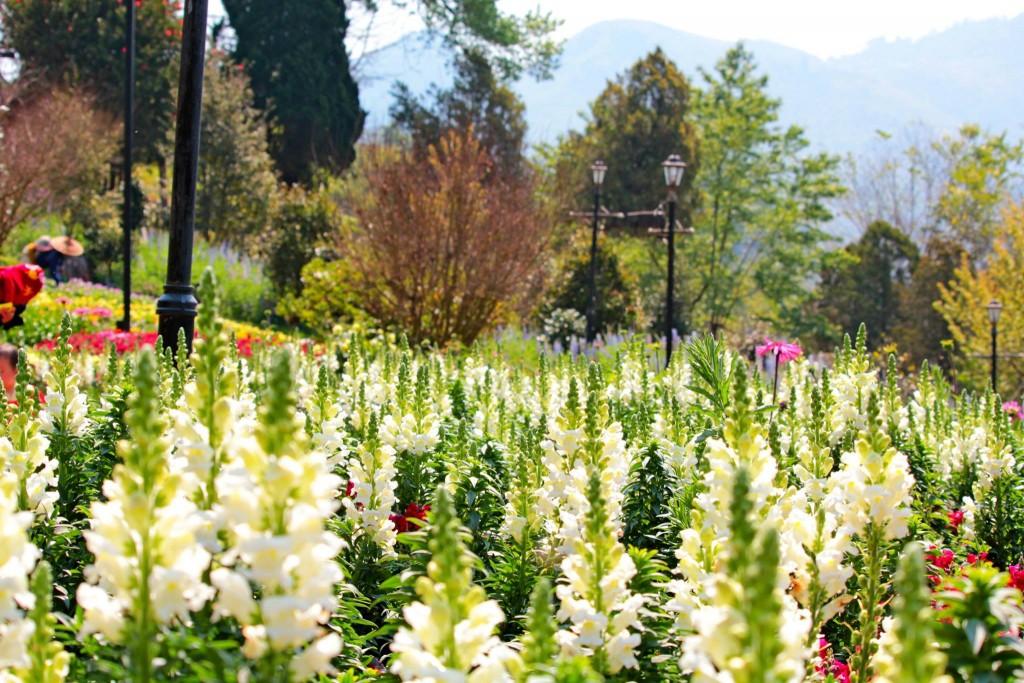 ดอยอ่างขาง-สวนดอกไม้