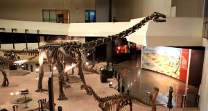 ด้านในพิพิธภัณฑ์ไดโนเสาร์2