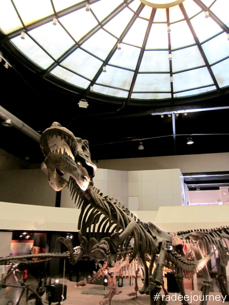 ด้านในพิพิธภัณฑ์ไดโนเสาร์4