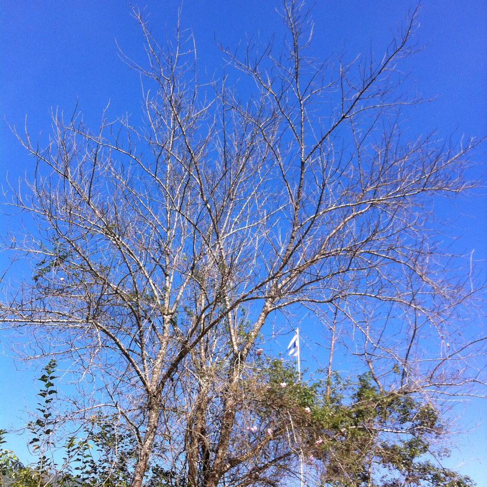 บ้านแม่กลางหลวง-ต้นไม้