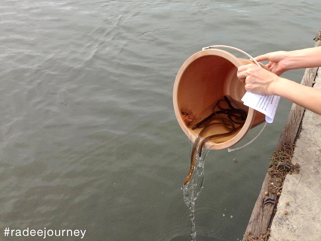 ปล่อยปลาวัดนางสาว1