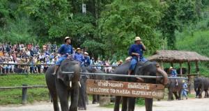 ปางช้างแม่สา-การเเสดง