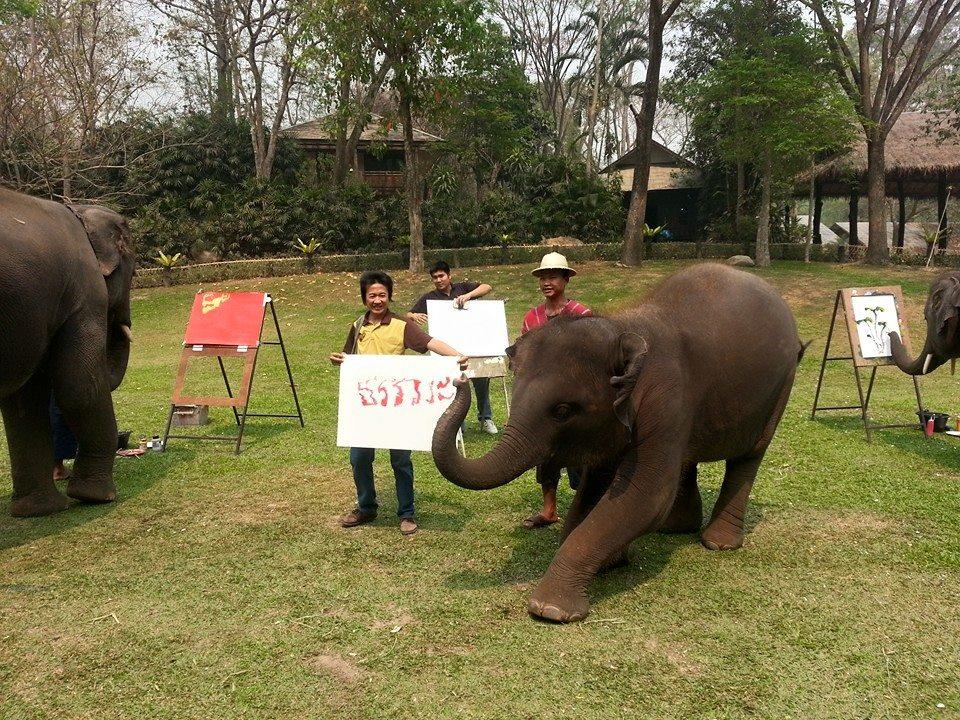 ปางช้างแม่สา-ความสามารถ
