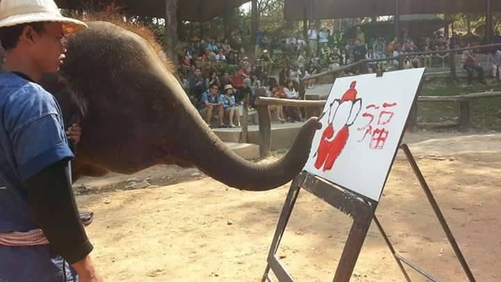 ปางช้างแม่สา-ช้างวาดภาพ