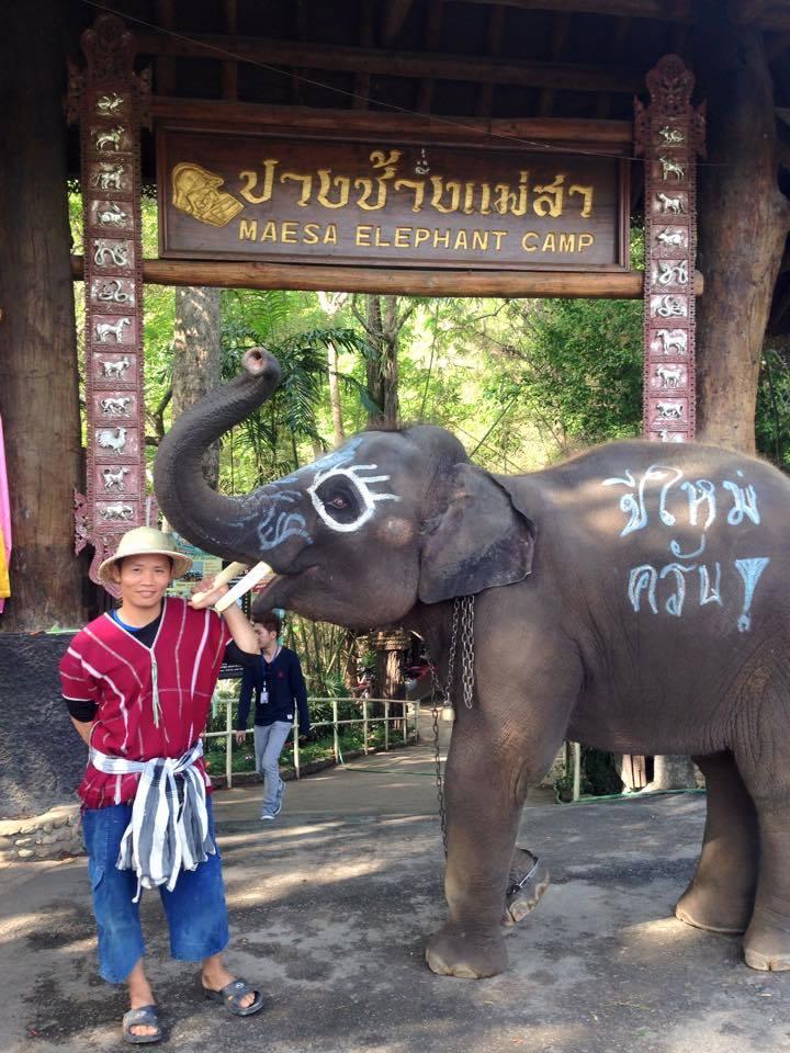 ปางช้างแม่สา-ป้าย