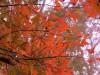 ป่าสนบ้านวัดจันทร์-ใบไม้เปลี่ยนสี