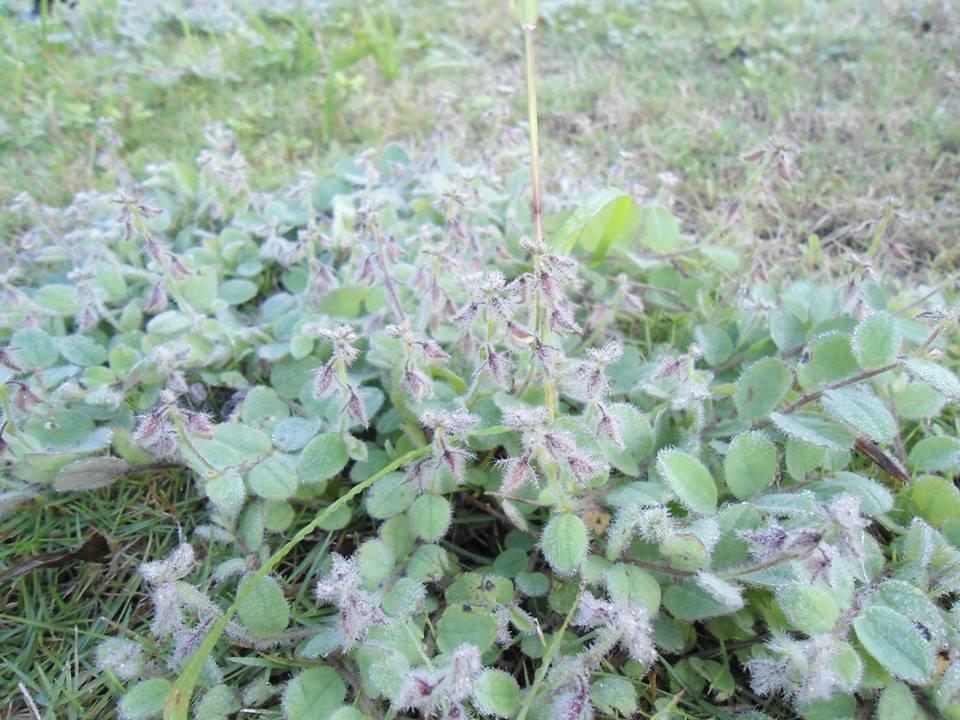 ผาเเดง-น้ำค้างบนยอดหญ้า