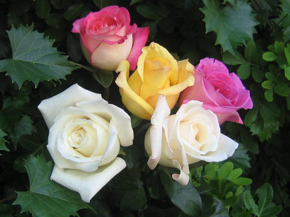พระตำหนักภูพิงค์ราชนิเวศน์-ดอกไม้
