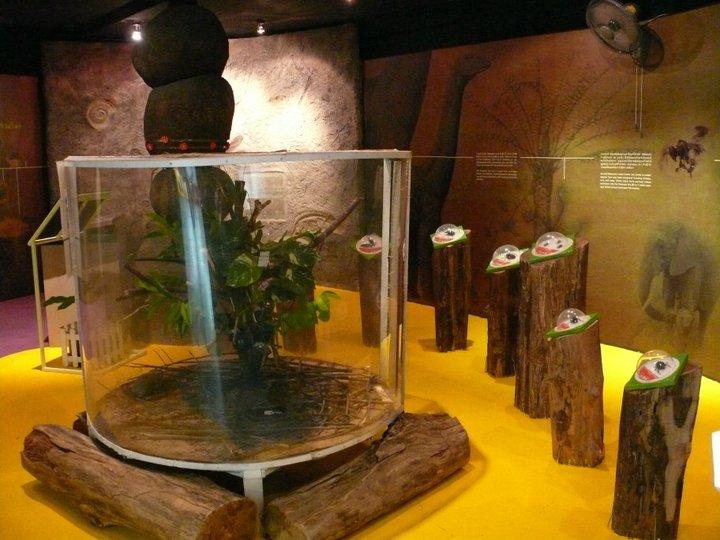 สวนผีเสื้อและโลกแมลง ภูเก็ต-การจัดเเสดง