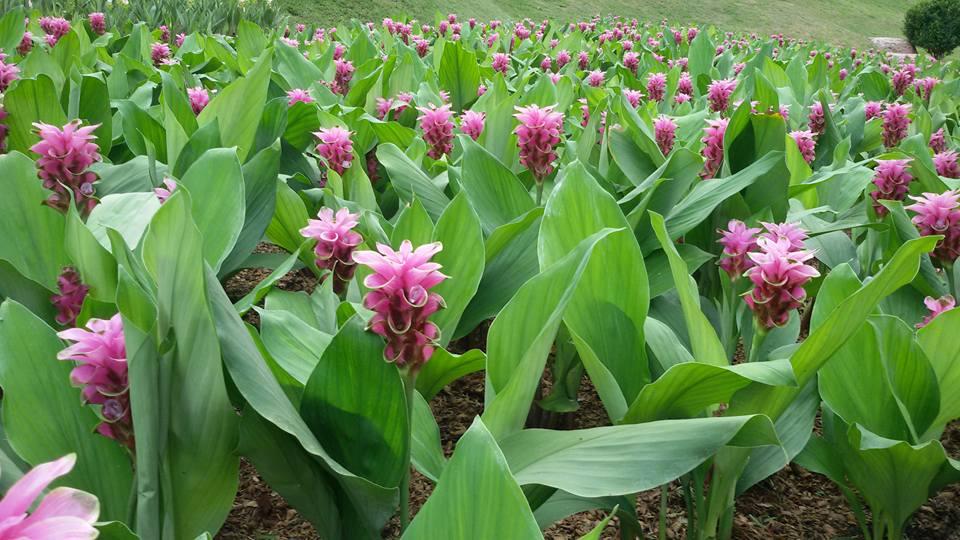 สวนพฤกษศาสตร์สมเด็จพระนางเจ้าสิริกิติ์-ดอกไม้