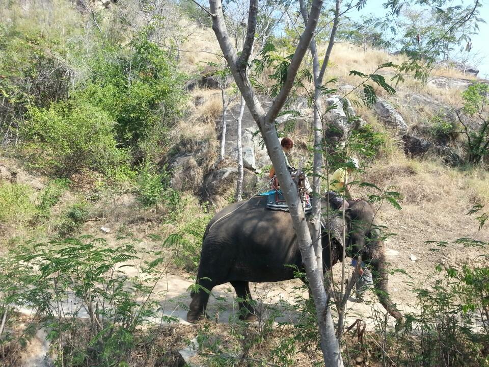 หัวหิน ซาฟารี-ช้าง