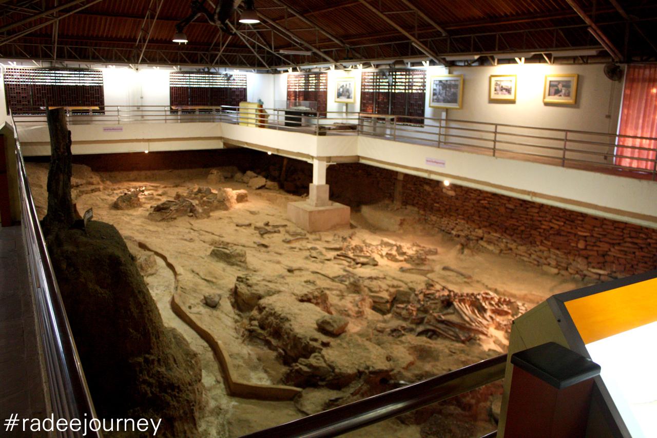 อาคารขุดค้นพบซากไดโนเสาร์