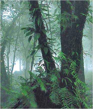 อุทยานแห่งชาติขุนขาน-ต้นไม้ใหญ่