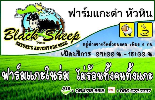 เที่ยว Black Sheep Hua Hin Fun Farm
