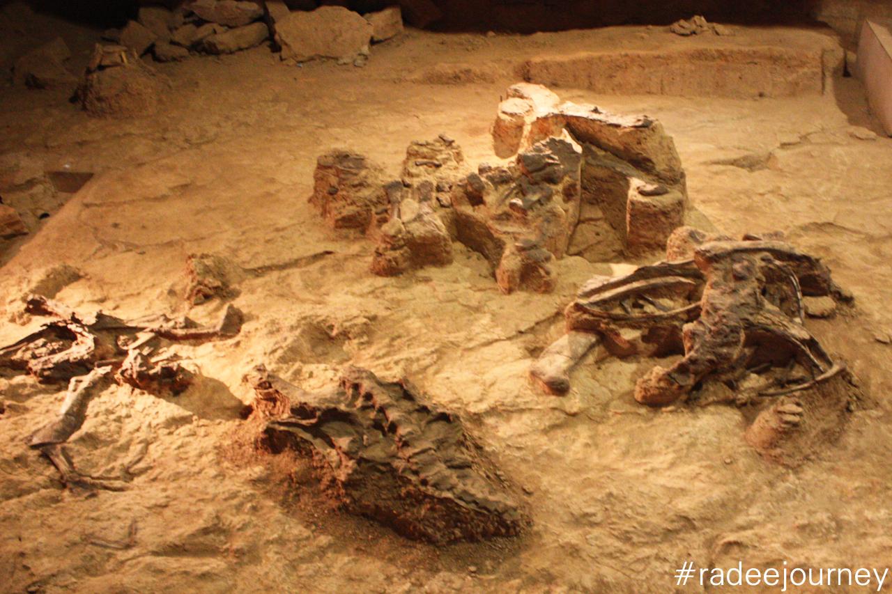 แหล่งขุดพบซากไดโนเสาร์
