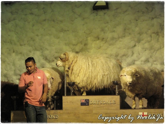 Scenery Sheep & Dog Show