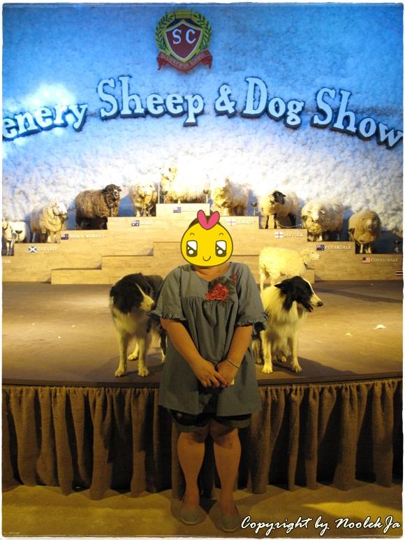 14-Dogshow