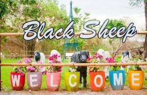 Black Sheep Hua Hin Fun Farm