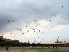 ท้องสนามหลวง-นกพิราบ