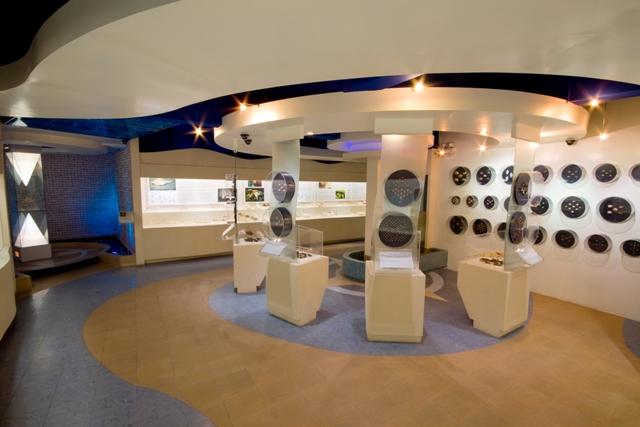 พิพิธภัณฑ์เปลือกหอยกรุงเทพ-การจัดเเสดง