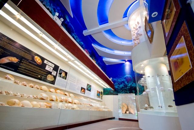 พิพิธภัณฑ์เปลือกหอยกรุงเทพ-บรรยากาศภายใน