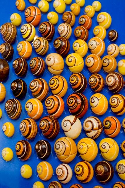 พิพิธภัณฑ์เปลือกหอยกรุงเทพ-สีสันสวยงาม