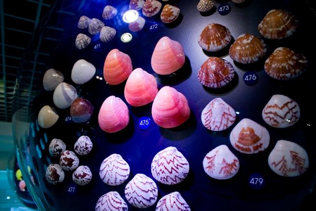 พิพิธภัณฑ์เปลือกหอยกรุงเทพ-หอยนานาชาติ