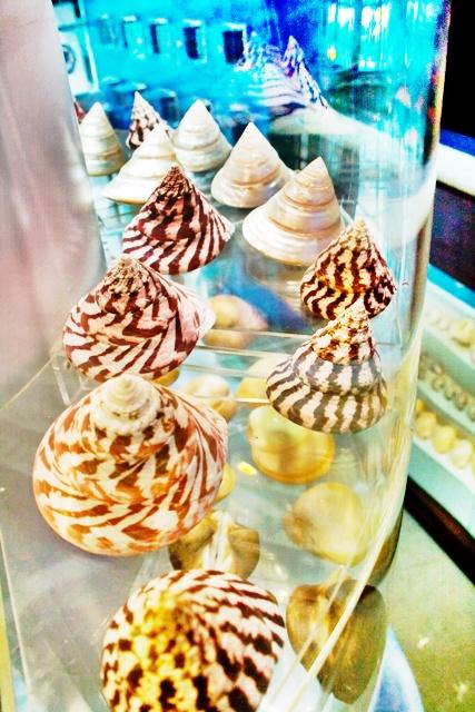 พิพิธภัณฑ์เปลือกหอยกรุงเทพ-หอยฝาเดี่ยว
