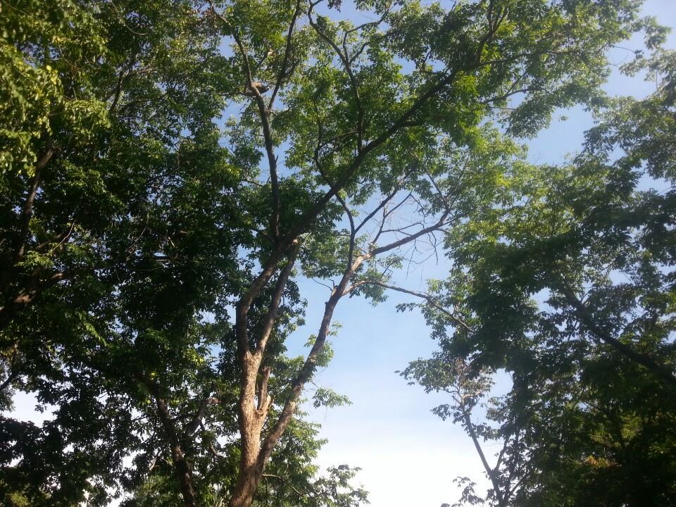 สวนรมณีนาถ-กิ่งก้านสาขาของต้นไม้