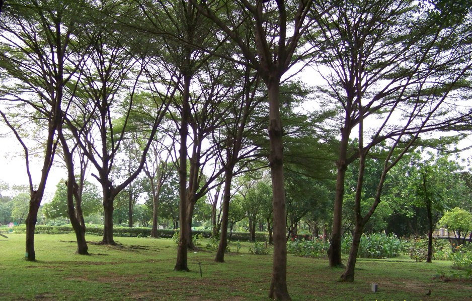 สวนสมเด็จพระนางเจ้าสิริกิติ์-ความร่มรื่น