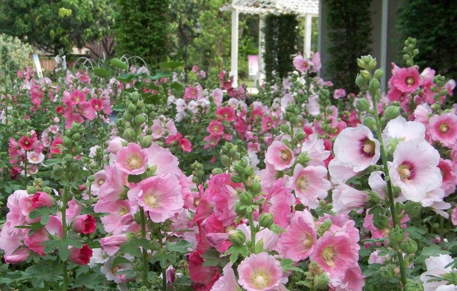 สวนสมเด็จพระนางเจ้าสิริกิติ์-ดอกไม้สวยๆ