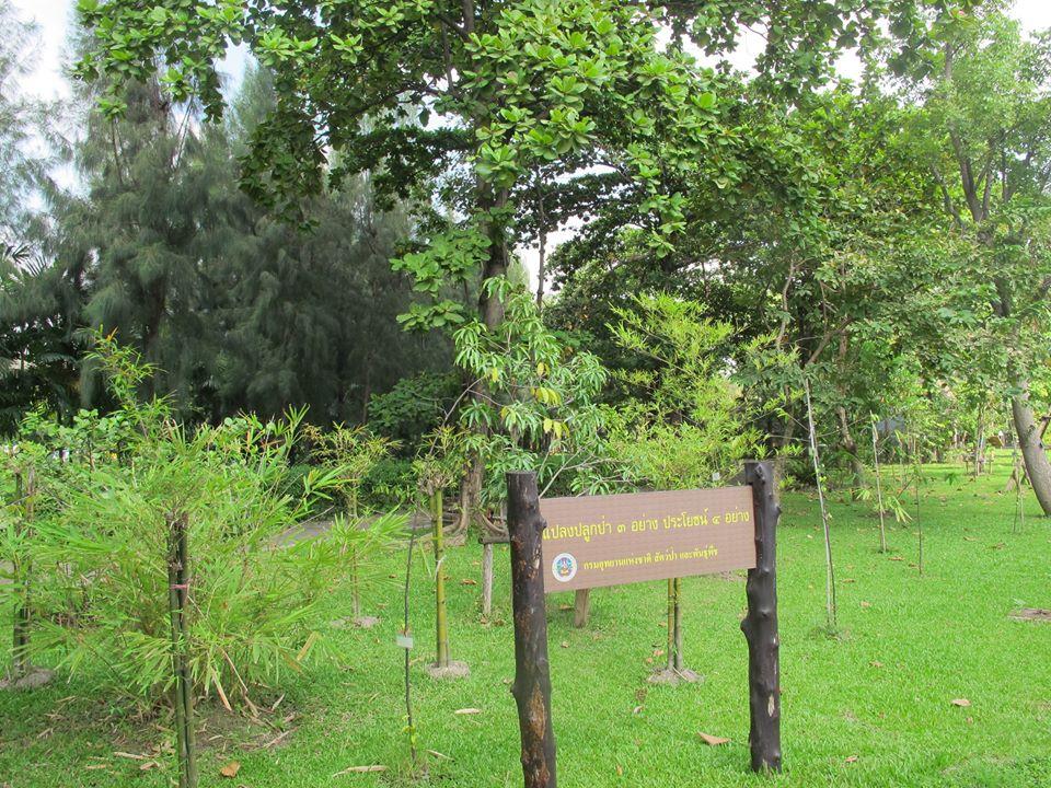 สวนสมเด็จพระนางเจ้าสิริกิติ์-เเปลงปลูกป่า