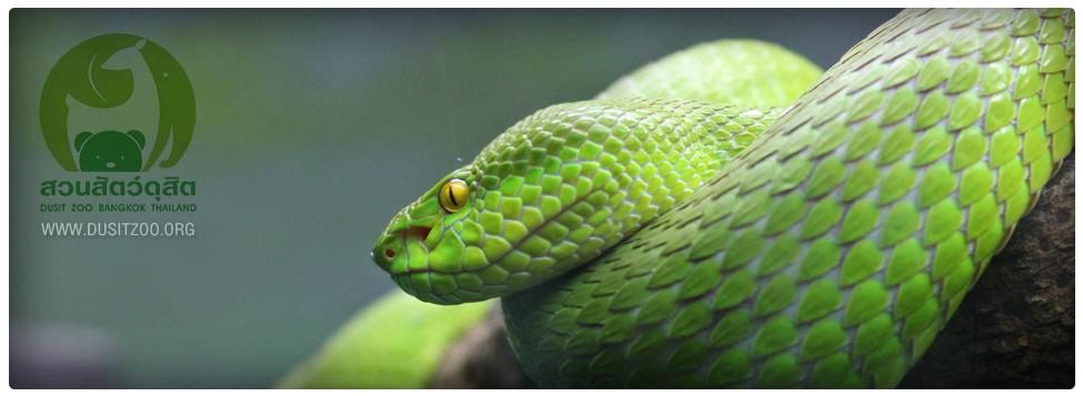 สวนสัตว์ดุสิต-งู