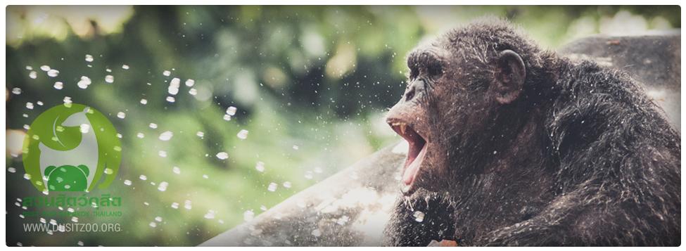 สวนสัตว์ดุสิต-ลิง