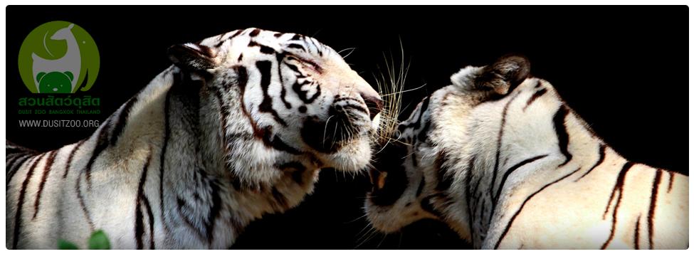 สวนสัตว์ดุสิต-เสือ
