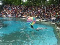 ซาฟารีเวิลด์-การเเสดงของสัตว์น้ำ