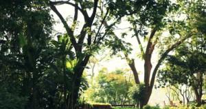 สวนทิพย์ บ้านเจ้าพระยา-งดงาม