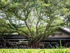 เดอะ เจมส์ เเฟคเตอรี่-ต้นไม่ใหญ่