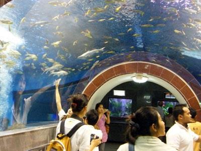 พิพิธภัณฑ์ปลาในวรรณคดี-อุโมงค์
