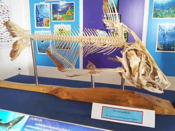 พิพิธภัณฑ์สัตว์น้ำหนองคาย-การจัดเเสดง