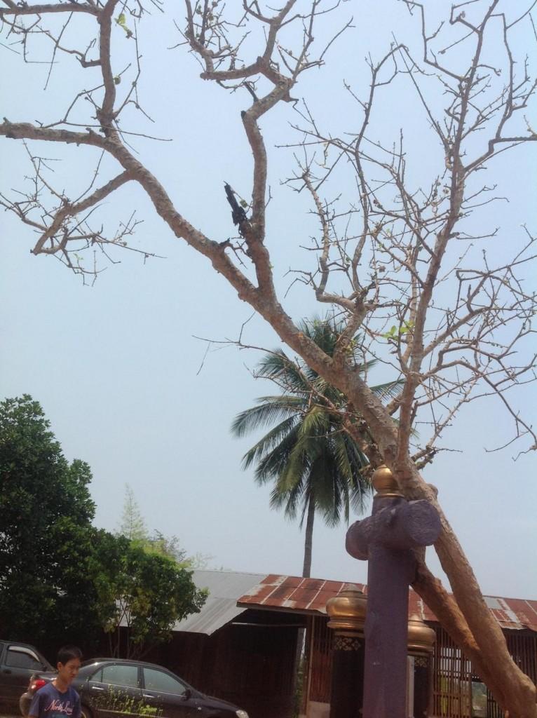 วัดปรางค์-กิ่งต้นไม้