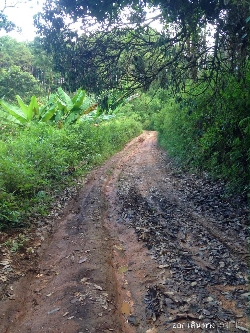 ถนนทางเข้าหน่วยต้นน้ำแม่หยอด หลังฝนตกถนนจะกลายเป็นร่องน้ำ การเดินทางช่วงฝนตกค่อนข้างอันตราย